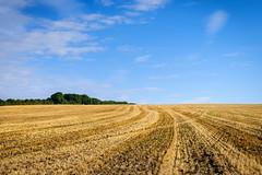 Field Stripes (Hector Patrick) Tags: dng flickrelite lightroom614 northyorkshire pentaxk1 yorkshire britnatparks landscape smcpentaxf50mmf14 pentax outside colours colorful field skyline gold farm