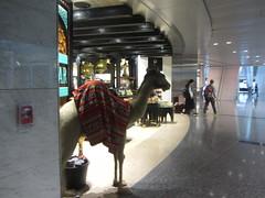 Hamed International Airport, Doha, Qatar  2018, shops (d.kevan) Tags: qatar doha hamedinternationalairport airports people shops camels animals