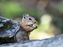 My Daily Bread (VGPhotoz) Tags: vgphotoz ourdailybread usa pieceofbread squirrel arizona nature biteoutoflife naturephotography bite photography artphotography funpics northamerica wildlife