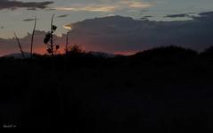 Desert Sunset (Barb McCourt) Tags: yucca texas elpaso desertphotography desertlandscape desertvegetation desertsouthwest colorimage mountains sunset