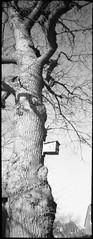 Wilster (Der Ohlsen) Tags: silvercam pseudorama analog 35mm kb bw film c41 kodakbw400cn wilster schleswigholstein deutschland germany