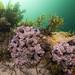 Algae ascidians sponges