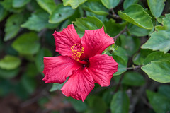 _DSC4879 (BasiaBM) Tags: botanical garden rabat morocco