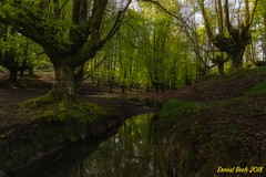The Magic forest III. (Ernest Bech) Tags: euskadi paisvasco vizcaya bosque forest hayedo landscape longexposure llargaexposició llums lights