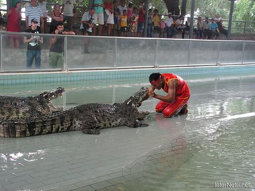 В пащу крокодилу Паттайя Таїланд Thailand InterNetri 42