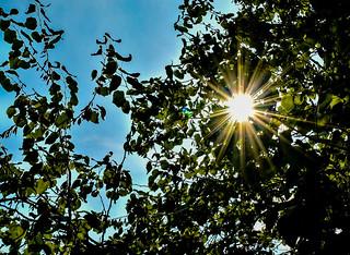 Sunburst I