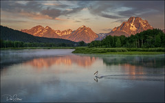 Oxbow Bend and the Pelican (JusDaFax) Tags: oxbowbend grandteton nationalpark wyoming pelican visitwyoming alpenglow morning sunrise sony sonyalpha landscapephotography landscapelover landscapehunter landscapelovers landscapecaptures landscapeporn getlost landscapephotomag trappingtones splendidearth agameoftones optoutside discoverearth exploretheglobe nakedplanet placeswow earthfocus ourplanetdaily earthofficial natgeo nationalgeographic awesomeearthpix davesoldanoimages