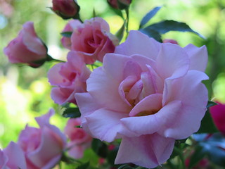 Have a rosey Saturday ... :-)