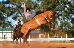 Tiago Fernandes e Cambona (Eduardo Amorim) Tags: gaúcho gaúchos gaucho gauchos cavalos caballos horses chevaux cavalli pferde caballo horse cheval cavallo pferd pampa campanha fronteira quaraí riograndedosul brésil brasil sudamérica südamerika suramérica américadosul southamerica amériquedusud americameridionale américadelsur americadelsud cavalo 馬 حصان 马 лошадь ঘোড়া 말 סוס ม้า häst hest hevonen άλογο brazil eduardoamorim gineteada jineteada