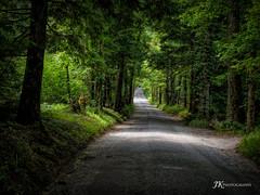 Morning Light (James Korringa) Tags: sparks road smokymountainnp sunlite trees