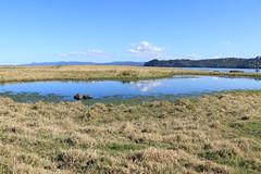 IMG_9059 (christineNZ2017) Tags: ambury regional park amburypark birdsanctuary birdlife bird sanctuary southauckland auckland newzealand winter