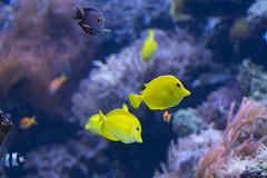 Grinsende Fische (Reiner Grasses) Tags: aquarium zoo duisburg fische lachen grinsen
