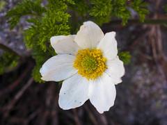P1011051 (laurent.guillon) Tags: paysage fleur