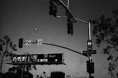 Santa Monica, L.A, CA (cestlameremichel) Tags: washi d film 500 iso aerial black white bnw monochrome monochromatic noir et blanc argentique analog analogue analogica 35mm filmisnotdead los angeles santa monica venice beach summer