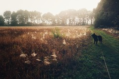 A touch of autumn 🍁 🍄 🍂 (Jos Mecklenfeld) Tags: forest bos nature natuur wandelen hiking westerwolde dutchshepherd dutchshepherddog shepherd shepherddog hollandseherder hollandseherdershond herder herdershond dog hond totoro sonyxperiaz5 xperia