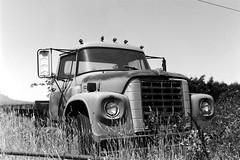 International Loadstar Truck (bac1967) Tags: optontessar106mmf35 zeissikonsuperikonta5312 zeissikon superikonta 5312 zeissikonsuperikonta optontessar opton tessar kodak kodakfilm kodaktmax100 kodaktmx kodaktmax tmx tmax beerenol beerol beer beerfilmdeveloper pabstblueribbonbeer pabst oregon pacificnorthwest pnw rangefinder rangefindercamera internationalloadstartruck flatbed flatbedtruck international loadstar truck crusty weathered abandoned decay rural ruraldecay farm farmequipment farmtruck willametvalley