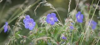 Flower power (explored)