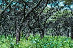 DSC_7106 (Maryna Beliauskaya) Tags: tree trees tanzania africa landscape nature forest park sky wood