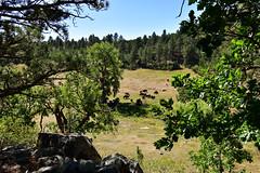 Prairie Trail - Custer State Park (MarkusR.) Tags: mrieder markusrieder nikon d7200 nikond7200 vacation urlaub fotoreise phototrip usa 2017 usa2017 southdakota custerstatepark landscape landschaft natur nature hike wanderung trail prairietrail