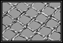 """A Bit Meshy..."" - MACRO MONDAYS - 13.8.18 - ""Mesh"" (NikonShutterBug1) Tags: macro closeup nikond7100 macromondays tokina100mm spe smartphotoeditor blackwhite bw mesh 7dwf"