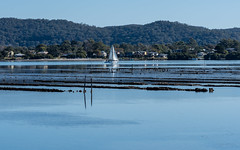 Oyster Farm on the Bay (Merrillie) Tags: daleyspoint blackwall landscape nature australia mountains sailingboat oysterleases clouds brisbanewater oysterfarm sthubertsisland boat coastal woywoy outdoors waterscape sea centralcoast water bay
