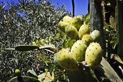 Sicily... (Mario Pellerito) Tags: canon eos 60d 50mm italia italie italy light luce palerme palermo pov sicilia sicilie sicily sizilien turismo unesco viaggiare natura nature
