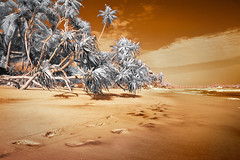 Hikkaduwa Beach, Sri Lanka- Infrared Photography (Custom WB)  (jc reyes) Tags: travels ir infrared infraredmaster digitalinfrared infraredimages infraredworld infraredphoto irfilter irphotography colorinfrared falsecolors invisiblelight creativeir creativeiramericas creativeireurope iginfrared photography infraredcamera infraredlandscape kolarivision jawdroppingshots epiccaptures igworld nikon nikonphotography nikkor summer sea 