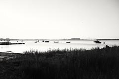 Stralsund / Devin (tom-schulz) Tags: x100f monochrom bw sw stralsund thomasschulz strelasund sund wasser boote horizont ooc outofcamera