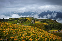 六十石山小瑞士金針花海 (Hong Yu Wang) Tags: sony a73 a7iii a7m3 1224g taiwan 六十石山 金針花 goldenneedleflower daylily