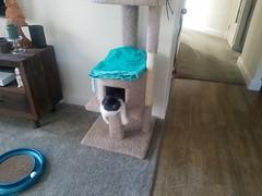 20180711_072545 (sobca) Tags: cat kottur kitte eesa miu kat pussi kato chat katze popoki gatto chatool billi felis cattus gato katt meo кошка बिल्ली 猫 γάτα vighro ᏪᏌחתול