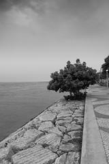 mirando al río (jssgarca) Tags: árbol tree orilla shore fuerte strong perspectiva perspective