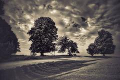 Cow Sky (downstreamer) Tags: leelanau michigan vineyard auroracellars bw landscape noiretblanc trees wine winery