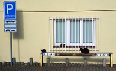 Cat parking (Yirka51) Tags: wall roadsign number pavement window park parking cat