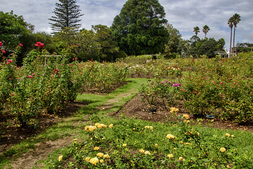 Parnell Rose Garden, Mission Bay, Auckland NZ