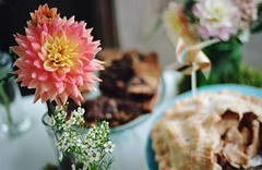 four years and counting, part three (manyfires) Tags: nikonf100 35mm analog film wedding anniversary pendarvisfarm married marriage love august summer party flowers floralscape dahlia dahlias bouquet bokeh