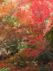 a (55) (hiromi89) Tags: japan beauty beautiful scenery flower wood pond