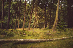 Pentland Hills (MilesGrayPhotography (AnimalsBeforeHumans)) Tags: britain pentlandhills bonaly woods forest trees fallen damp edinburgh europe haar huawei huaweip20pro mobilephone cameraphone landscape landscapephotography outdoors photography photo scotland scenic scottish scottishlandscapephotography mist uk unitedkingdom