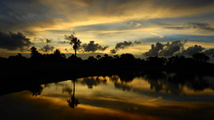 Yellow Sunset (Jim Mullhaupt) Tags: sunset sundown dusk sun evening endofday sky clouds color red gold orange pink yellow blue tree palm outdoor silhouette weather tropical exotic wallpaper landscape nikon coolpix p900 pond lake water reflection manateecounty bradenton florida jimmullhaupt cloudsstormssunsetssunrises photo flickr geographic picture pictures camera snapshot photography nikoncoolpixp900 nikonp900 coolpixp900