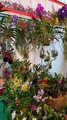 Singapore Garden Festival 2018 @Garden by the Bay (ScTan) Tags: singaporegardenfestival2018 gardensbythebay garden flower samsungnotefanedition tillandsia orchid airplant