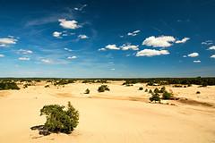 Kootwijkerzand (Lars Loomans) Tags: pola polarizer filter kootwijkerzand watchtower veluwe kootwijk europeansahara shiftingsand zand stuifzand