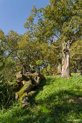 agorregi (32) (Luigy_ugaroi) Tags: aia gipuzkoa iturraran jardinbotanico pagoeta bosque otoño