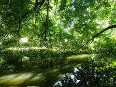 green hell one (peterpe1) Tags: green grün water bochum flickr peterpe1 stadtpark