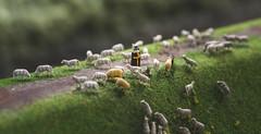 Handicraft shepherd (JohnDifool) Tags: miniaturwunderland schäfer shepherd