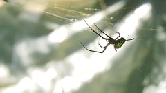 Spider (Hayseed52) Tags: spider weaver