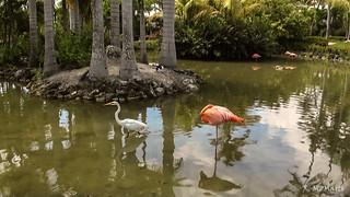 Flamencos y garza - Flamingos and Heron