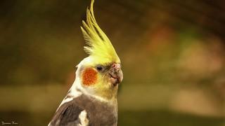 Bird - 5711