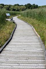 18-07-12_Point_Pelee-3 (kookabrophoto) Tags: marsh marshland green plants board walk boardwalk bench cattails path wood point pelee national park