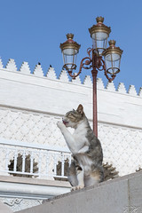 2018/07/11 16h53 chat devant le mausolée Mohammed V (Rabat) (Valéry Hugotte) Tags: 35mm maroc mohammedv rabat canon canon5d canon5dmarkiv cat chat gatos katze mausoléemohammedv mosquéehassan quartierhassan toilette rabatsalékénitra ma