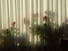 Neuer Morgen 002 (bratispixl) Tags: fotosafari oberbayern germany bratispixl tele lichtwechsel schärfentiefe fokussierung bergwelt spot outdoor indoor architektur landschaft grat hügel wasser sonnenfotografie see flus tiere nature nigth day spuren blumen wolken video