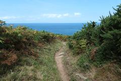 Pathway to the sea - Grève le Lecq to Plémont (Monceau) Tags: pathway trail path sea horizon ferns grèvelelecqtoplémont